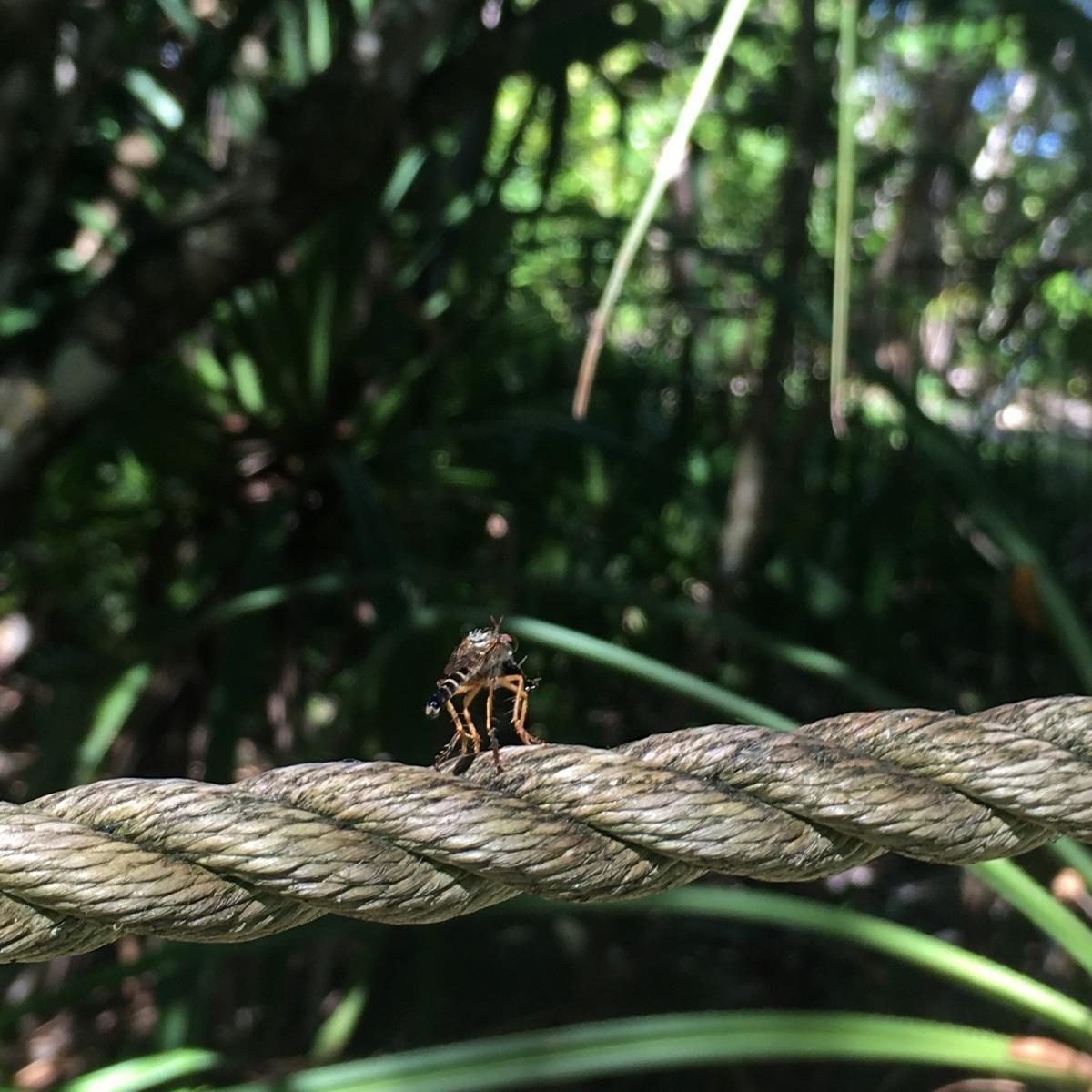 Fitzroy Island Queensland: Fitzroy Island Nature Wrap