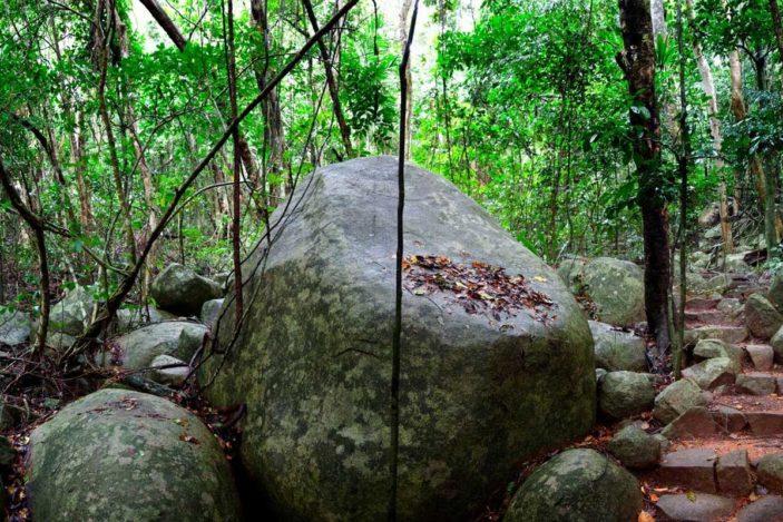 rainforest-fitzroy-island
