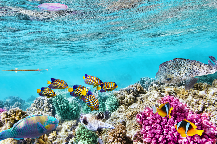 Best-Place-To-See-The-Great-Barrier-Reef