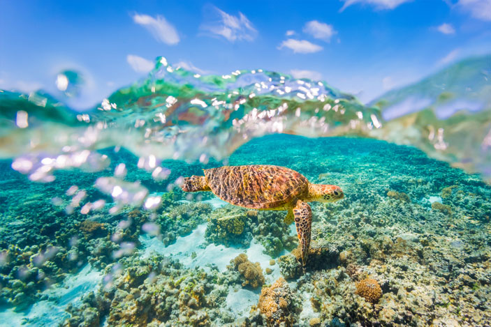 Great Barrier Reef Facts Every Traveller Should Know