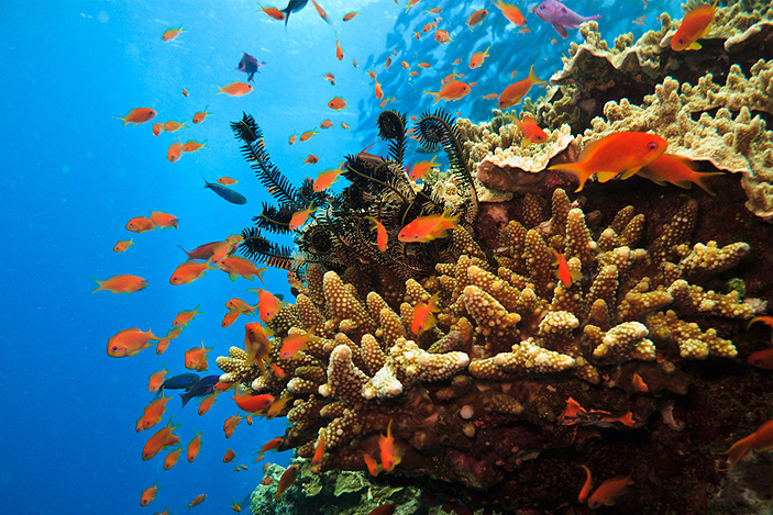 Best Day Tours & Attractions In Cairns