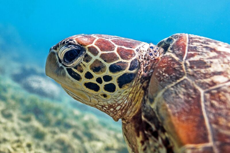 Fitzroy Island Turtle Rehabilitation Centre