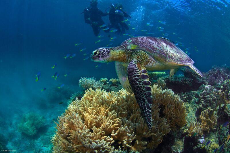 Fitzroy Island Scuba Diving