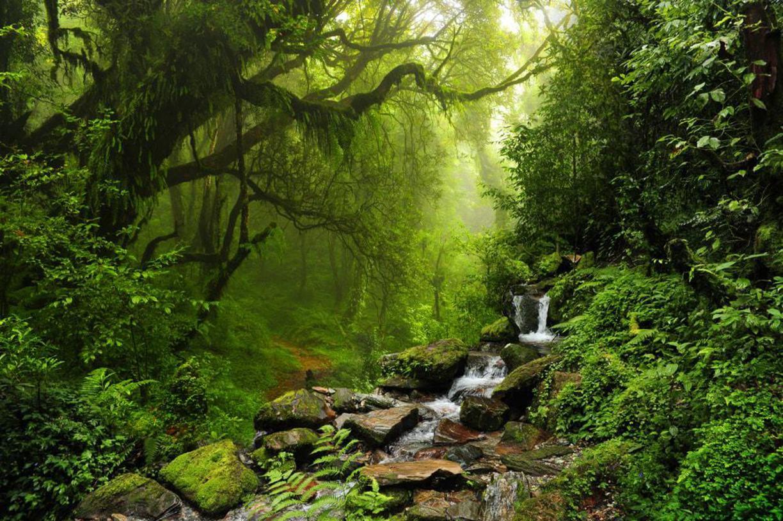 Dunk Island Holidays: Best Rainforest Walks Near Cairns
