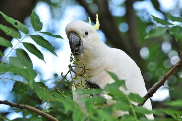 Fitzroy Island Wildlife