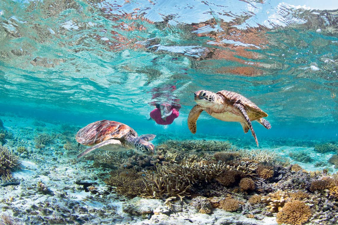 Best Places To See Turtles On The Great Barrier Reef Near Cairns Mojo Opal Reef