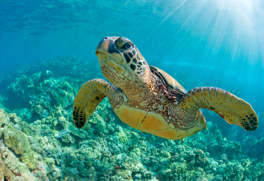 Best Places to See Sea Turtles in Australia