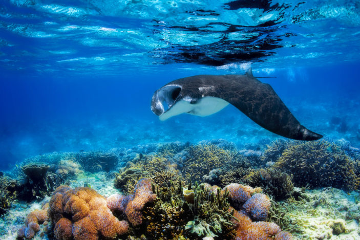 What Sea Animals Can I Expect to See When Visiting Fitzroy Island