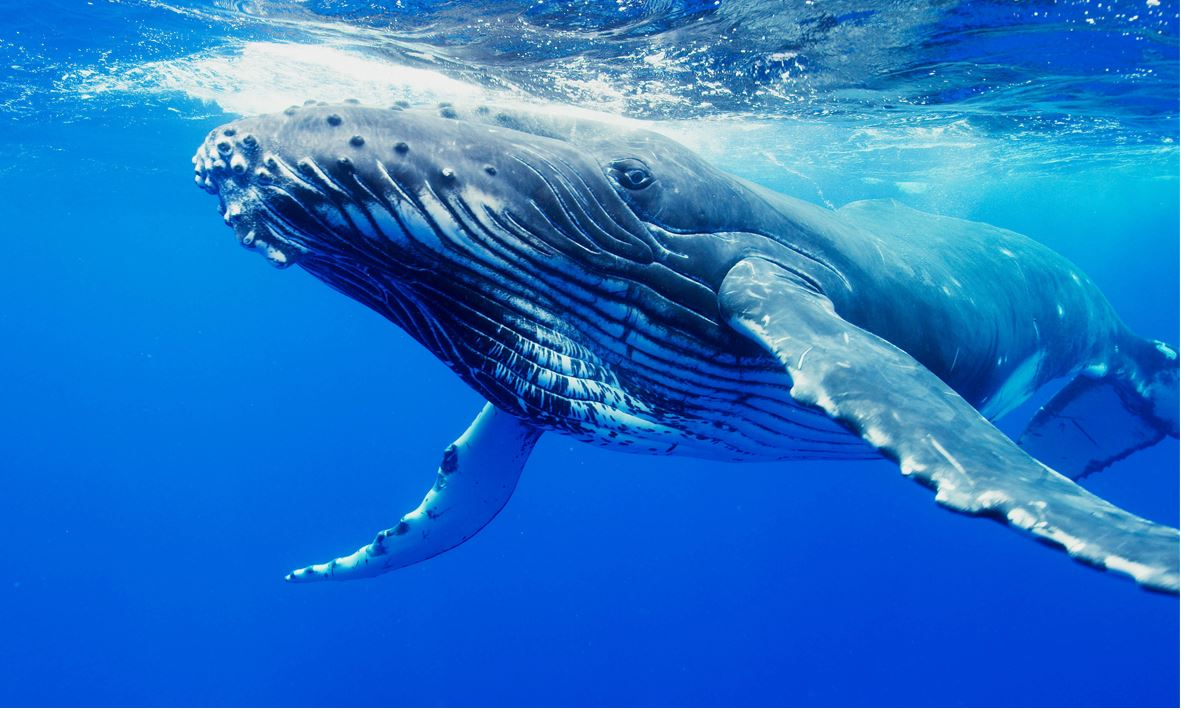 What Sea Animals Can I Expect to See When Visiting Fitzroy Island Whales