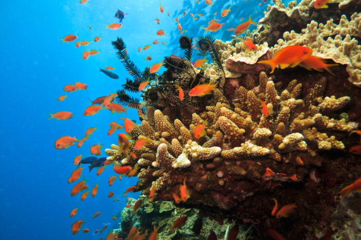 Why You Absolutely Must Visit Australia's Great Barrier Reef