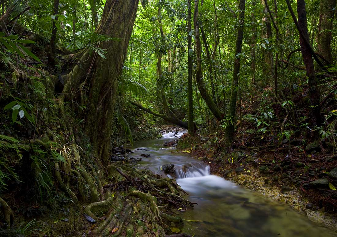 Why You Absolutely Must Visit Australia's Great Barrier Reef Proximity to the Daintree Rainforest