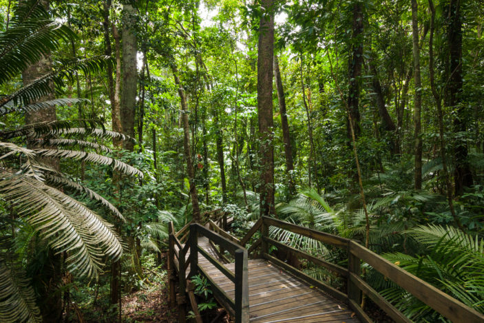 Four Incredible Rainforest Walks Near Cairns