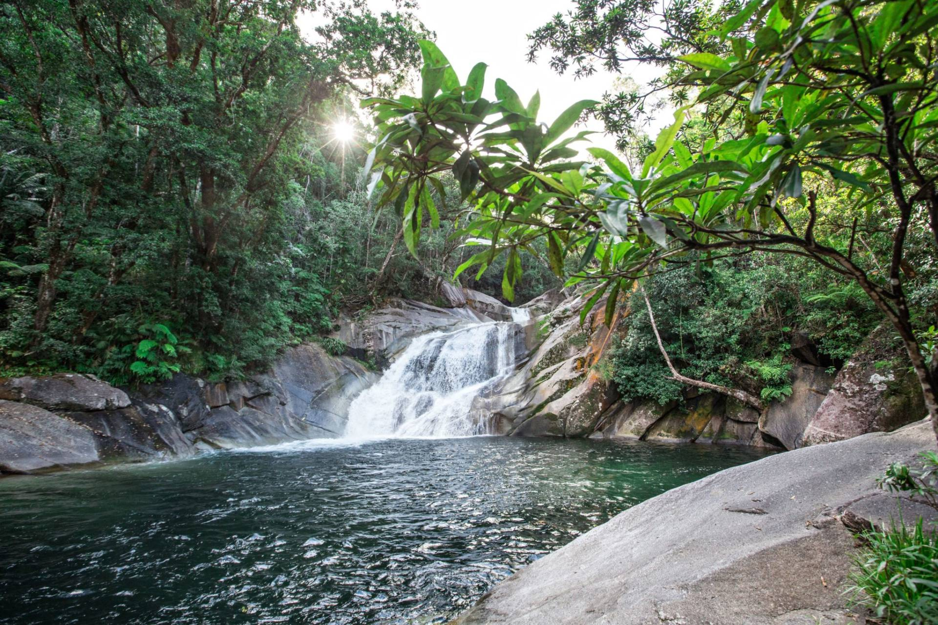 Four Incredible Rainforest Walks Near Cairns Mount Bartle Frere