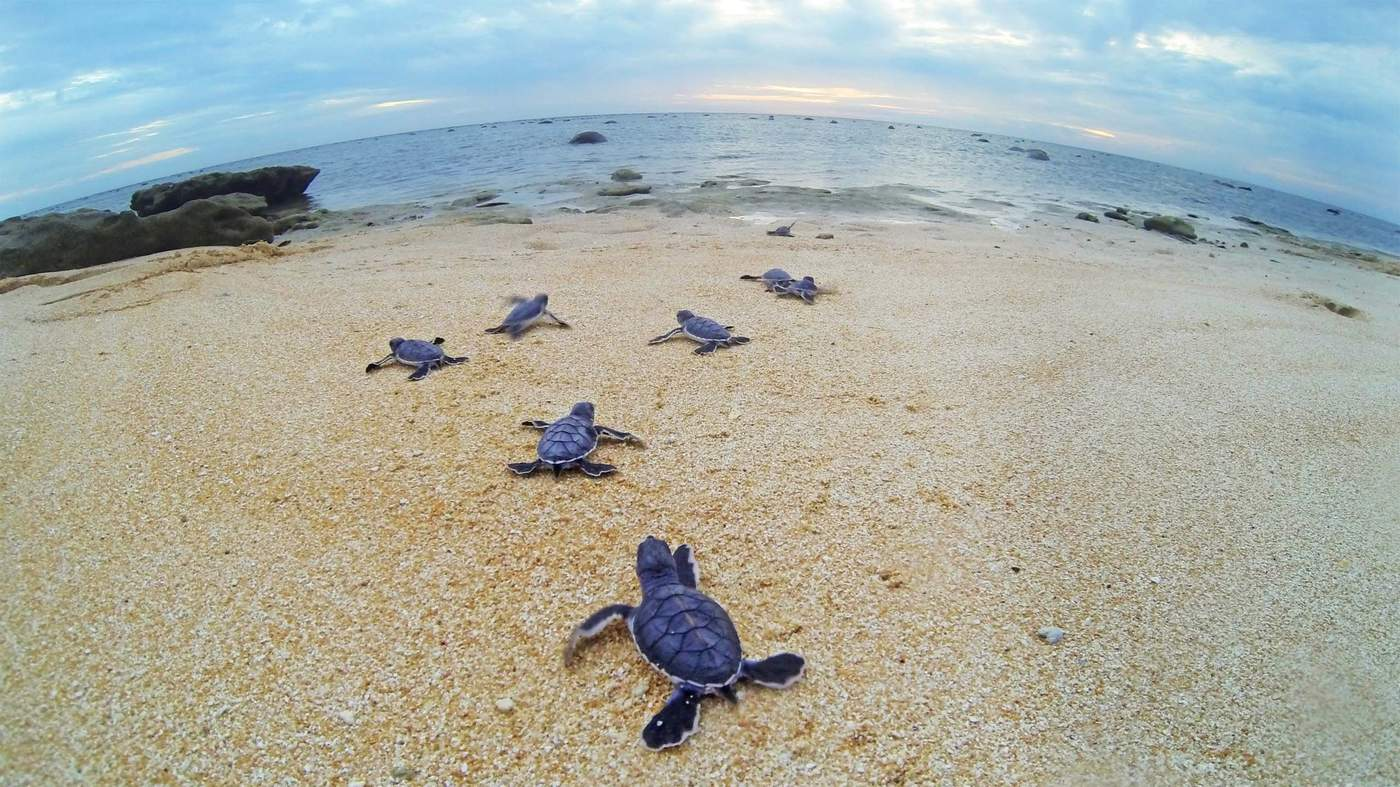 Five of the Best Locations to See Sea Turtles in Queensland Raine Island