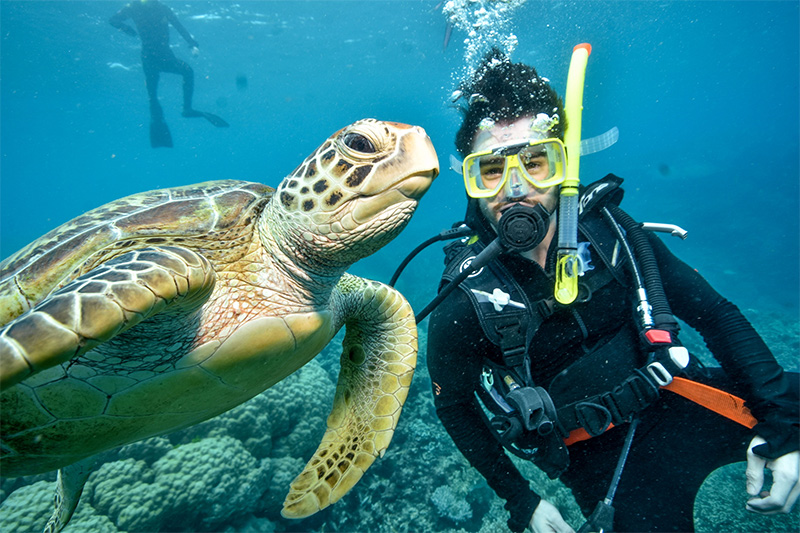 Five of the Best Locations to See Sea Turtles in Queensland intro