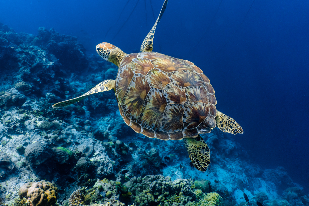 Five of the Best Locations to See Sea Turtles in Queensland