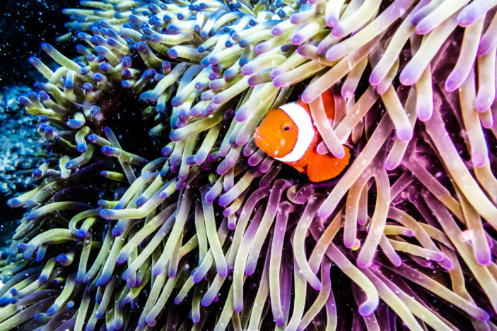 Planning Your Visit to the Great Barrier Reef - Your Questions Answered