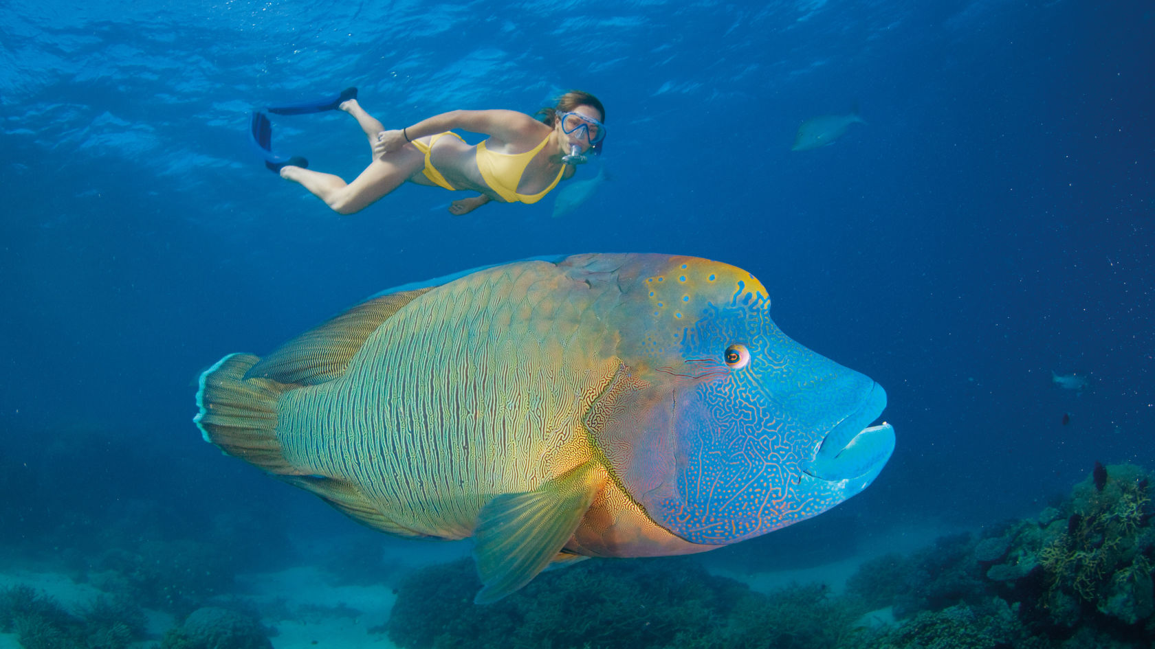 Planning Your Visit to the Great Barrier Reef - Your Questions Answered What types of animals call the Great Barrier Reef home