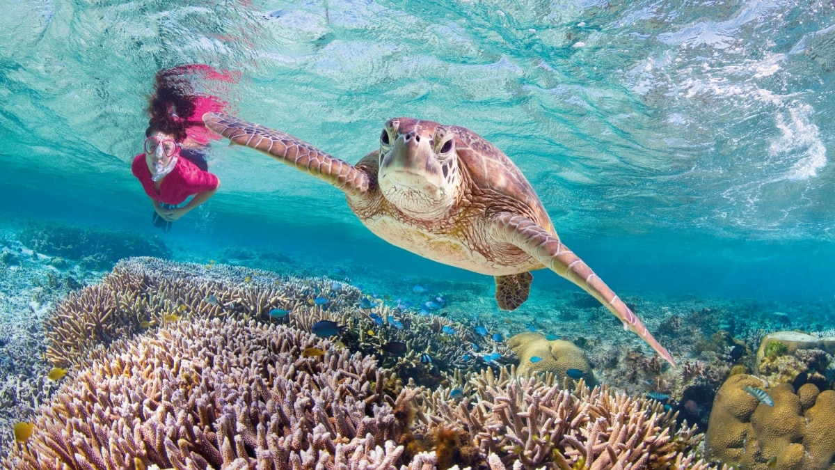 Planning Your Visit to the Great Barrier Reef - Your Questions Answered Where are the best places to see turtles near Cairns on the Great Barrier Reef