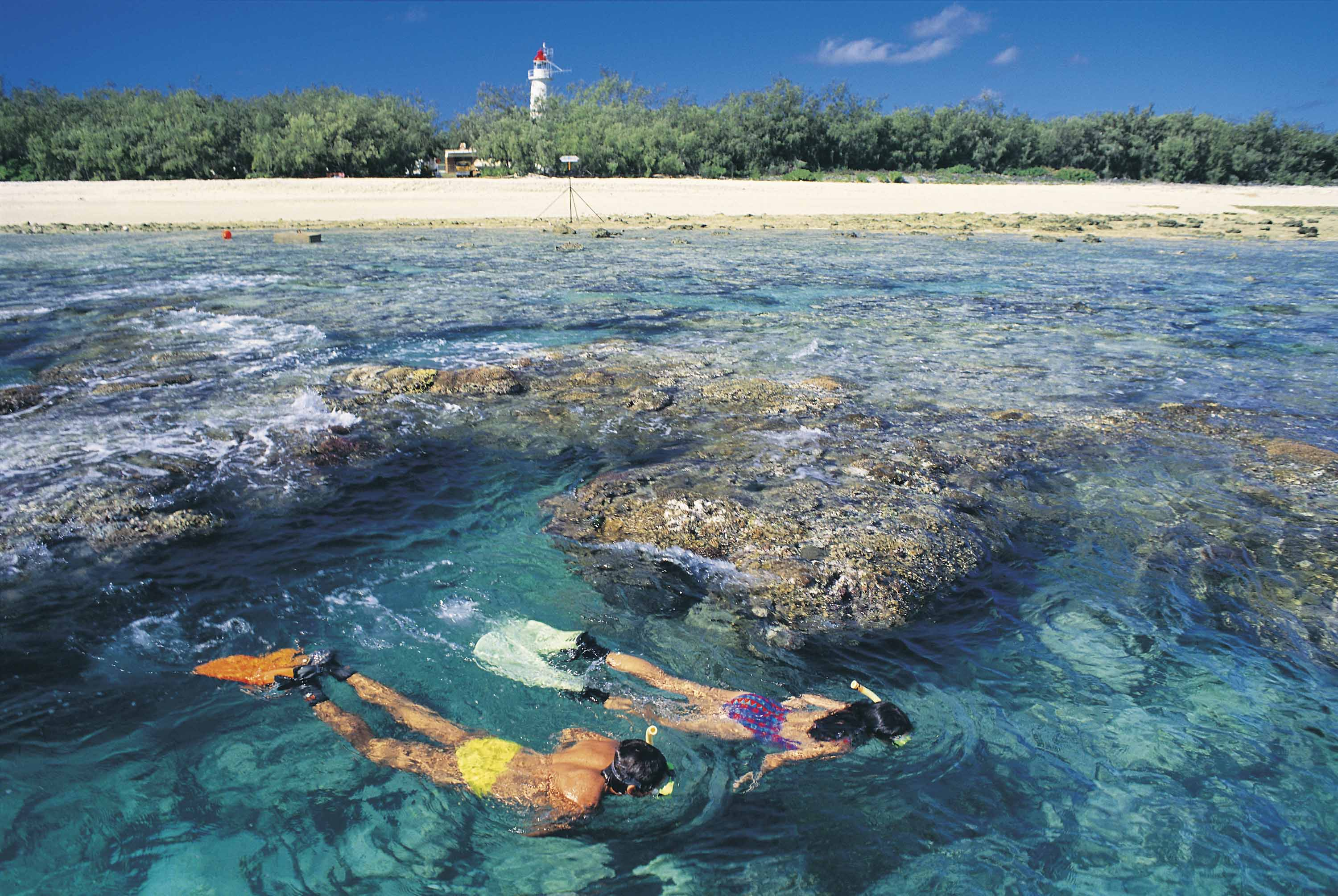 Amazing Island Snorkelling Locations on the Great Barrier Reef Lady Elliot Island