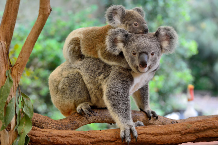 Best Places to See Australian Animals Near Cairns and Port Douglas