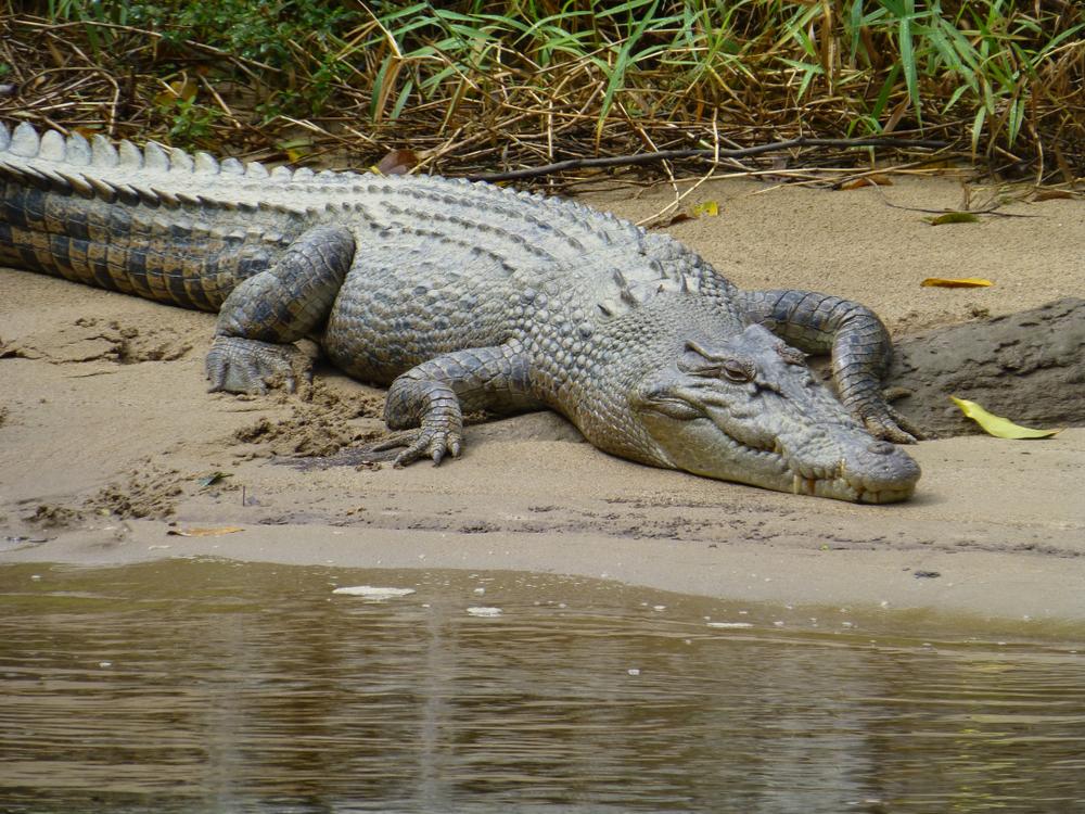 Best Places to See Australian Animals Near Cairns and Port Douglas Hartley's Crocodile Adventures, Wangetti Beach