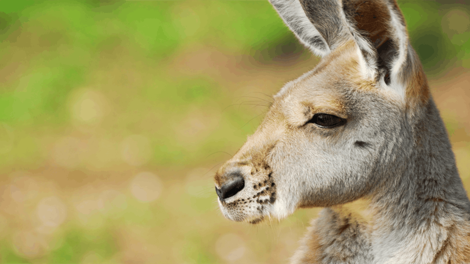 Best Places to See Australian Animals Near Cairns and Port Douglas Intro