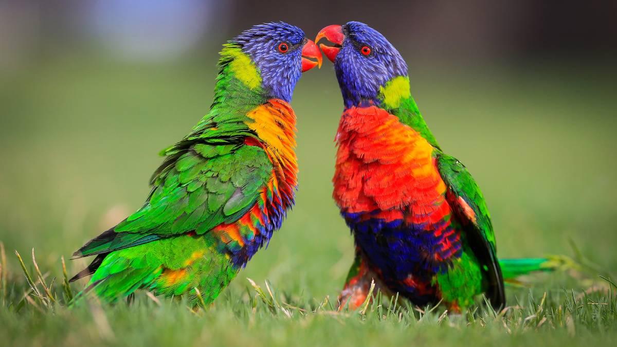 Best Places to See Australian Animals Near Cairns and Port Douglas Wildlife Habitat, Port Douglas