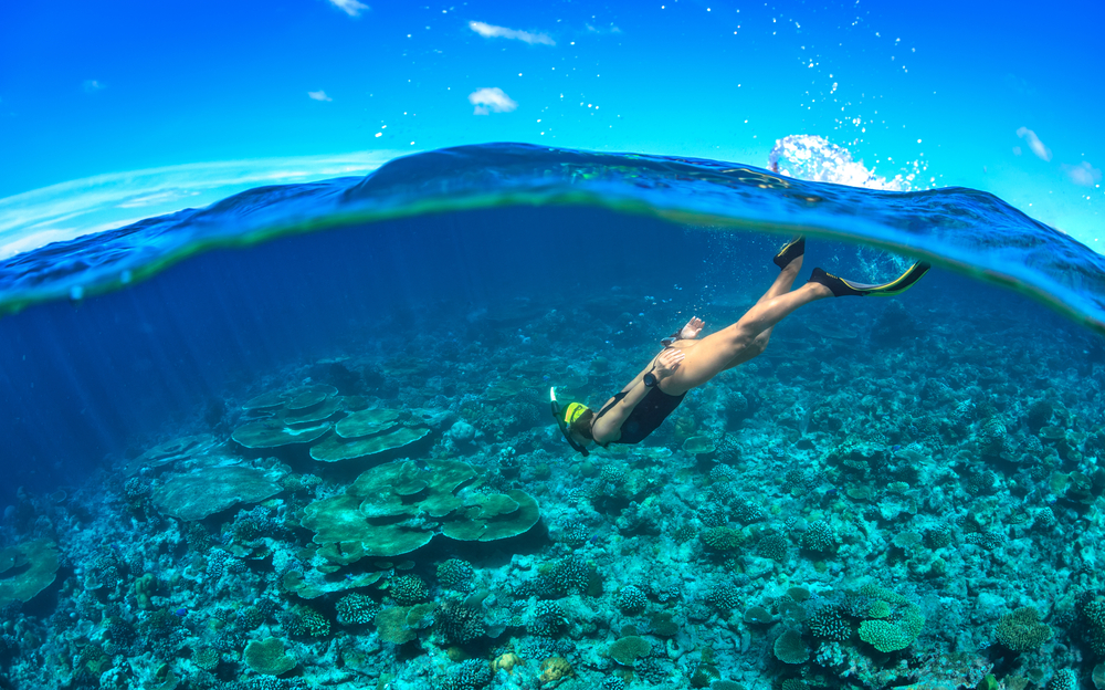 Three Sensational Snorkelling Spots Near Cairns