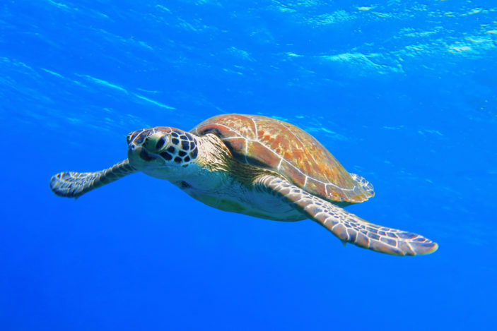 Five Stunning Locations to See Turtles on the Great Barrier Reef Near Cairns