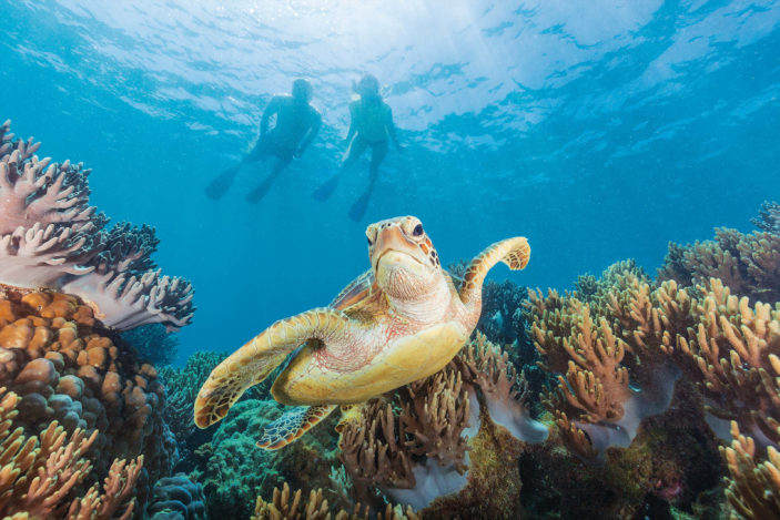 Five Stunning Locations to See Turtles on the Great Barrier Reef Near Cairns Agincourt Reef