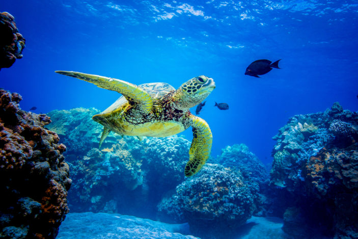 Australia's Best Locations for Spotting Sea Turtles