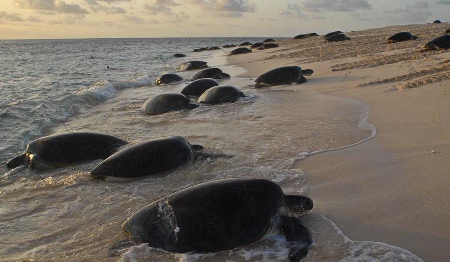 Australia's Best Locations for Spotting Sea Turtles Raine Island