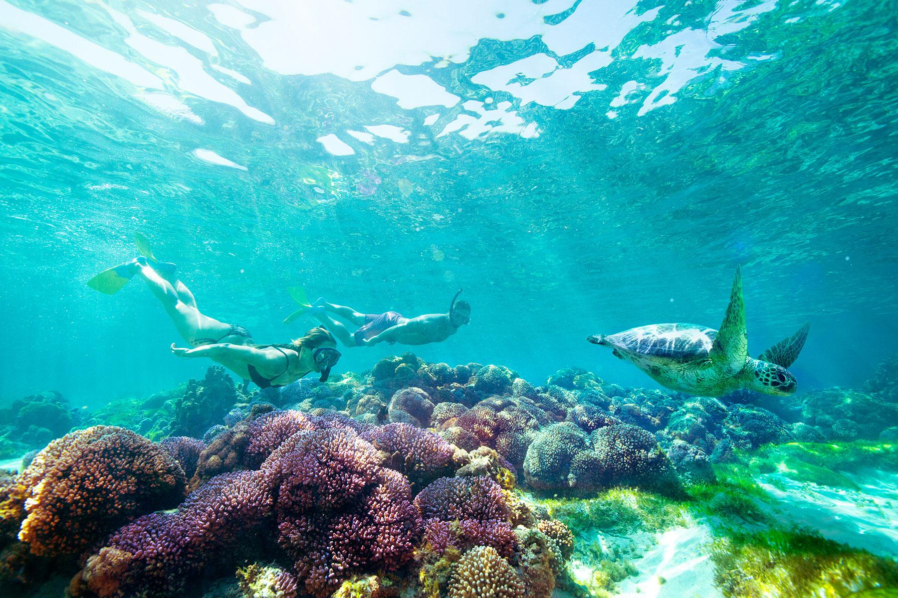 Eight Spectacular Snorkelling Spots on Australia's East Coast Lord Howe Island