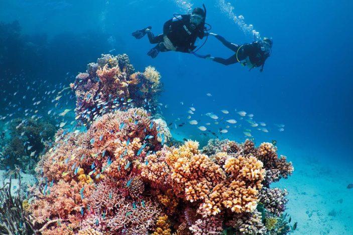 Five Unmissable Water Activities for Adventure Lovers on Fitzroy Island Scuba Diving