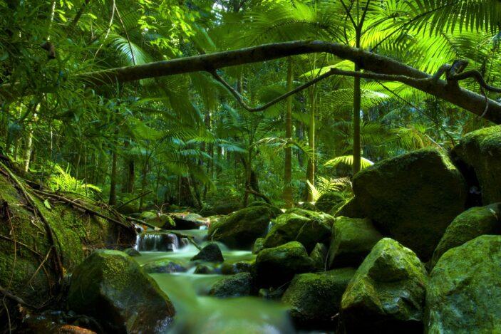 Four Stunning Rainforest Walks You Can't Miss Near Cairns