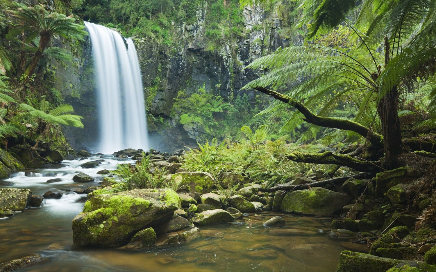 Four Reasons Why Tropical Far North Queensland is a Must-see Destination The Daintree Rainforest